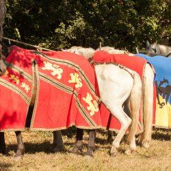 spectacle-equestre-chevalerie-ranrouet-2016-petit-bleus-photos-img_0268