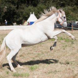 spectacle-equestre-chevalerie-ranrouet-2016-petit-bleus-photos-img_0404