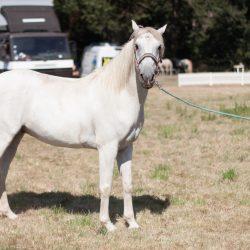spectacle-equestre-chevalerie-ranrouet-2016-petit-bleus-photos-img_0407