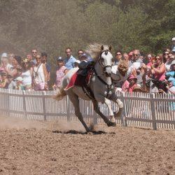 spectacle-equestre-chevalerie-ranrouet-2016-petit-bleus-photos-img_0452