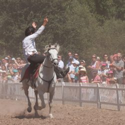 spectacle-equestre-chevalerie-ranrouet-2016-petit-bleus-photos-img_0459