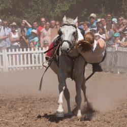 spectacle-equestre-chevalerie-ranrouet-2016-petit-bleus-photos-img_0468