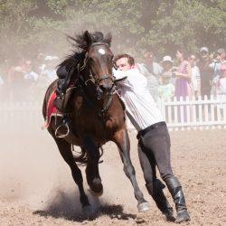 spectacle-equestre-chevalerie-ranrouet-2016-petit-bleus-photos-img_0481